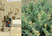 Nuevas especies vegetales redescubiertas
