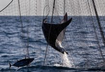 Greenpeace - pesca ilegal.jpg