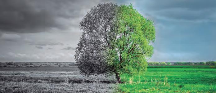 Transición ecológica