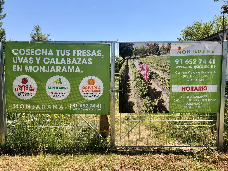 Fresas ecológicas Finca Monjarama Madrid