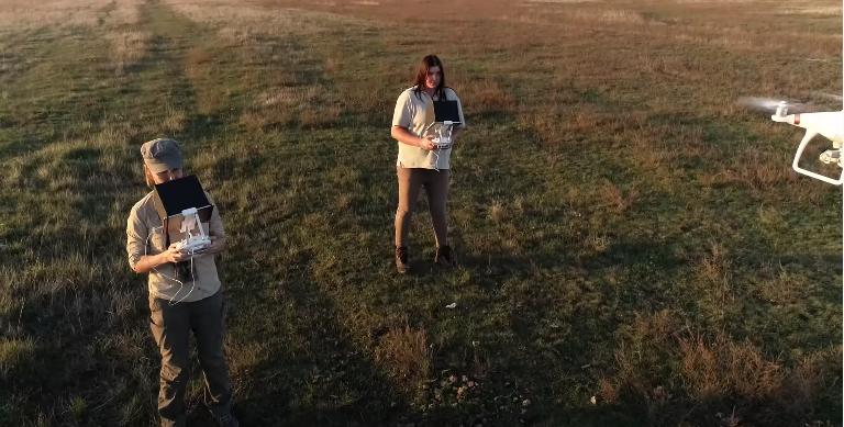 caballos salvajes przewalski microsoft drones