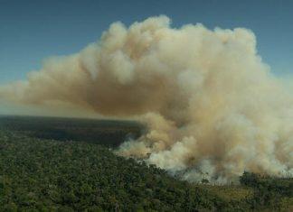 Greenpeace-deforestacion banco Santande