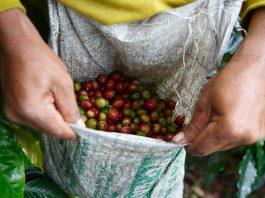 Fairtrade Coffee Indonesia