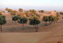 DesertLeaves
