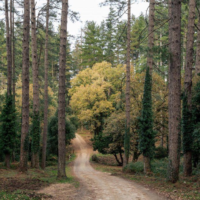 Parco Italia